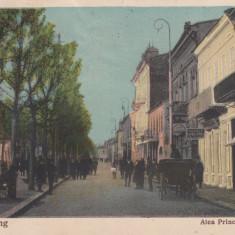 CAMPULUNG, ALEEA PRINCIPELE CAROL, MAGAZINE, COAFOR, TRASURI, CIRC. 1931 - Carte Postala Bucovina dupa 1918, Circulata, Printata, Campulung Moldovenesc