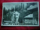 Ilustrata Paltinis - Case de Odihna , anii '50