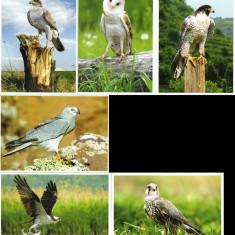 Fauna - Carti Postale din Moldova 2016 - Carte postala tematica, Necirculata, Printata