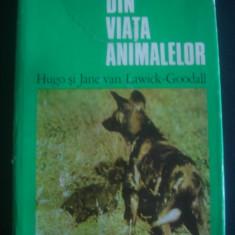 HUGO & JANE VAN LAWICK GOODALL - DIN VIATA ANIMALELOR