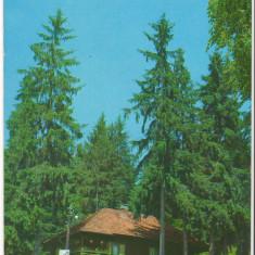 CPI (B6867) CARTE POSTALA - CABANA HOMOROD, HARGHITA - Carte Postala Transilvania dupa 1918, Circulata, Fotografie