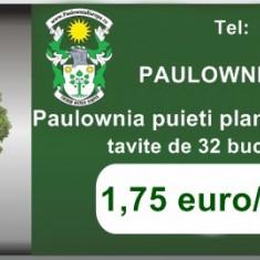 Vand Paulownia