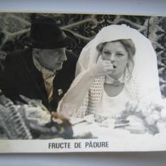 Fotografie originala, film romanesc, Fructe de padure, 16,5/12, Necirculata