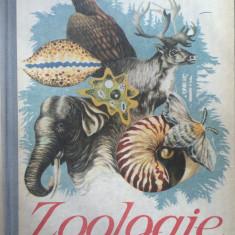 ZOOLOGIE MANUAL PENTRU CLASA A VI-A - C. Bogoescu, A. Stoicescu, Al. Dabija - Carte Zoologie