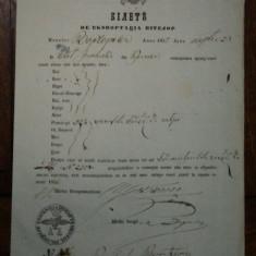 Craiova, bilet de export pentru vite al negustorului Constantin T. punct lucru Borgorova, 1855 - Pasaport/Document