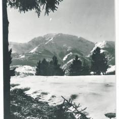 7323 - Romania ( 362 ) - Bistrita Nasaud, M-tii RODNEI - postcard - used - 1965 - Carte Postala Transilvania dupa 1918, Circulata, Printata
