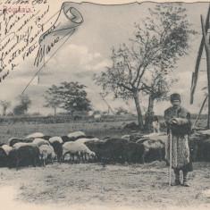SALUTARI DIN ROMANIA, CIOBAN, MESERII, CIRCULATA, NOV. ''04 - Carte postala tematica, Printata