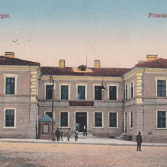 DOBROGEA, BAZARGIC, PRIMARIA - Carte Postala Dobrogea 1904-1918, Necirculata, Printata