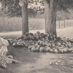 VANZATOR DE PEPENI, CIRCULATA 11. ''917, POSTA MILITARA, CENZURA - Carte postala tematica, Printata