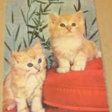 Tematica - animale - pisici - Iugoslavia - 2+1 gratis - RBK11827 - Carte postala tematica, Circulata, Fotografie