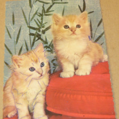 Tematica - animale - pisici - Iugoslavia - 2+1 gratis - RBK11827