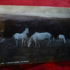 Ilustrata Pictura - Cai 1904 -fotografie prin Oranotipie
