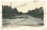 273 - Teleorman, ALEXANDRIA - old postcard - unused, Necirculata, Printata
