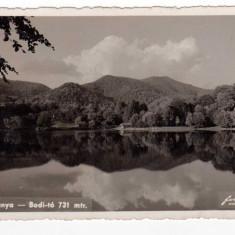 BAIA MARE BAIA SPRIE LACUL BODI 731 M NAGYBANYA - Carte Postala Maramures dupa 1918, Circulata, Fotografie