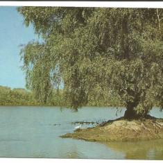 @carte postala(ilustrata)-DELTA DUNARII - Carte Postala Dobrogea dupa 1918, Necirculata, Printata