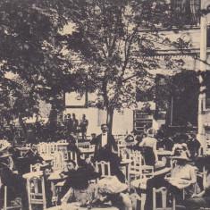 SIBIU, RESTAURANT, MUZICANTI - Carte Postala Transilvania dupa 1918, Necirculata, Printata