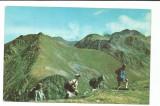 @carte postala(ilustrata)-FAGARAS-vedere, Necirculata, Printata