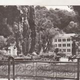 Bnk cp Oravita - Vedere - necirculata - Carte Postala Banat dupa 1918, Printata