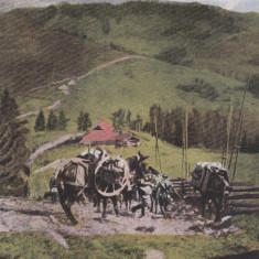 MARAMURES, SALUTARI DIN RUSPOLYANA - Carte Postala Maramures 1904-1918, Necirculata, Printata