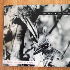 FIICA DUNARII SI A MARII- ION MICLEA - Carte Fotografie