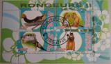 Colita fauna Congo 2010 (264)