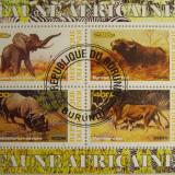 Colita fauna Burundi 2009 (121)