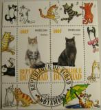 Colita pisici Du Tchad 2010 (253)