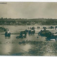 1028 - Bucovina, PUTNA, Gypsies washing horses - old PC. real Photo, unused - Carte Postala Bucovina 1904-1918, Necirculata, Fotografie