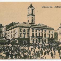 2215 - Bucovina, CERNAUTI, Market - old postcard - unused - Carte Postala Bucovina 1904-1918, Necirculata, Printata