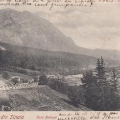 SINAIA, GURA PADUREI, CLASICA, CIRCULATA 1902 - Carte Postala Muntenia pana la 1904, Printata
