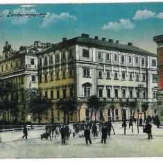 3561 - Bucovina, CERNAUTI, Market - old postcard - used - 1918 - Carte Postala Bucovina 1904-1918, Circulata, Printata