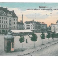 3556 - Bucovina, CERNAUTI, Market - old postcard - used - 1914 - Carte Postala Bucovina 1904-1918, Circulata, Printata