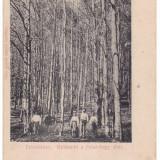 Romania, Felsobanya, Baia Sprie carte postala necirculata: Padurea Bukk, animat