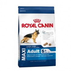 Royal Canin Maxi Adult 5+ Mature 4 kg - Mancare caini