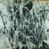 In Delta Dunarii Dan Grigorescu Bucuresti 1967 214 foto alb negru 16 foto color - Carte Geografie