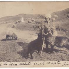 #1958- Romania, c.p. UPU circulata 1913: Cioban cu oi, folklor, colectia Bellu