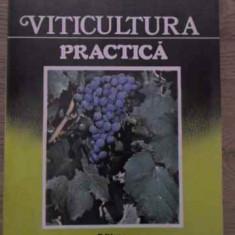 Viticultura Practica - Ioan Neamtu, 385083 - Carti Agronomie