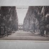 BURDUJENI, ALEEA GARII, 1929 //CARTE POSTALA