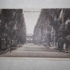 BURDUJENI, ALEEA GARII, 1929 //CARTE POSTALA - Carte Postala Bucovina 1904-1918, Circulata, Fotografie