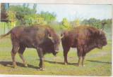 Bnk cp Romania - Zimbru - cp necirculata, Printata
