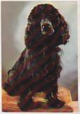 Bnk cp Romania - Cocker Spaniel - cp necirculata, Printata