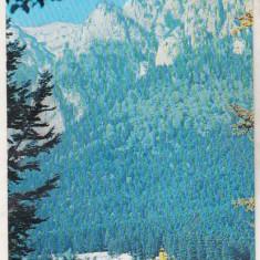 Bnk cp Busteni - Vedere - necirculata - Carte Postala Muntenia dupa 1918, Printata