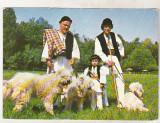 Bnk cp Romania - Ciobanesc romanesc mioritic - cp necirculata, Printata