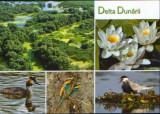 Carte postala necirculata -Pasari din Delta Dunarii,nuferi