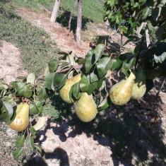 Vand palinca, tuica de fructe, mere, pere, piersici, 100%, naturala, 2 ani