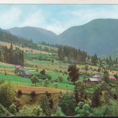 Bnk cp Borsa - Peisaj - uzata - Carte Postala Maramures dupa 1918, Necirculata, Printata