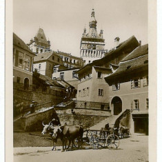 1959 - SIGHISOARA, Market, Oxcart - old postcard - unused - Carte Postala Transilvania 1904-1918, Necirculata, Printata