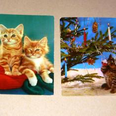 Lot Set 2 buc vederi animale pisici Cehia Iugoslavia vechi 2+1 gratis RBK19670