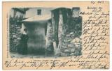 3538 - Litho, Sibiu, SALISTE, Fantana Foltei - old postcard - used - 1903