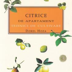 Dorel Hoza - Citrice de apartament - 656229